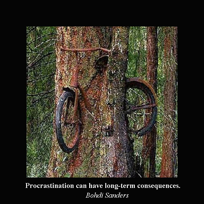 Weird pictures, Bikes, Trees, Forest, Procrastination, forest, funny pictures
